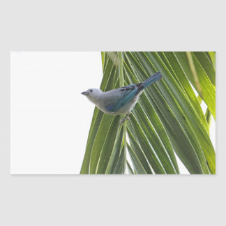 Tropical Bird Picture on Palm Tree Rectangular Sticker