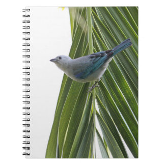 Tropical Bird Picture on Palm Tree Spiral Notebook