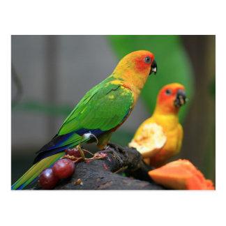 Tropical Bird Postcard