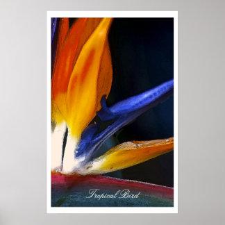 Tropical Bird, poster
