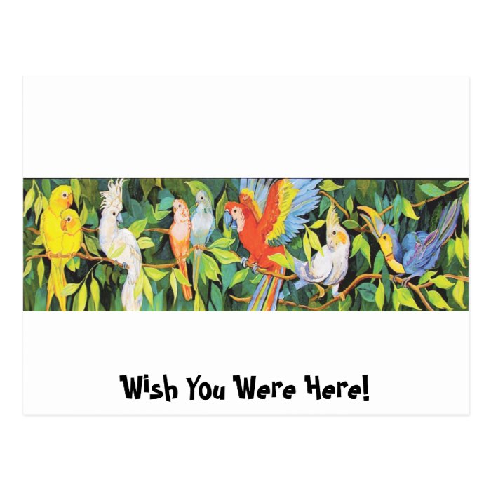 Tropical Birds Designs Postcard