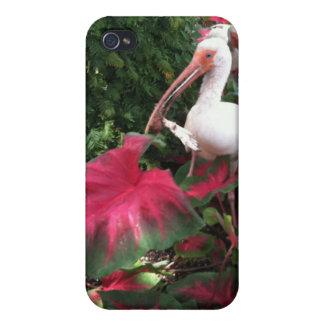 Tropical Birds iPhone 4/4S Cases