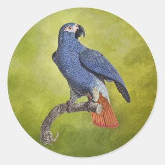 Tropical Birds Vintage Parrot Illustration Classic Round Sticker