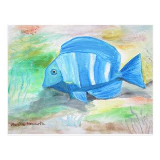 Tropical blue fish postcard