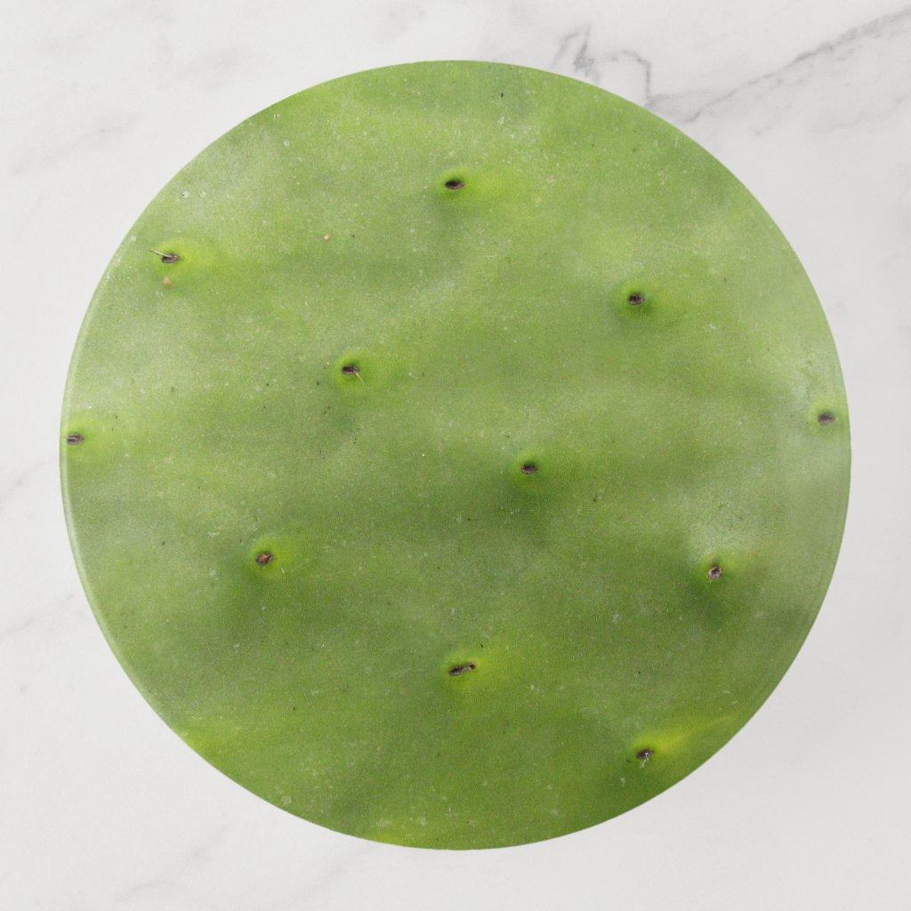 Tropical Botanical Green Cactus Photo