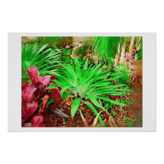 Tropical Bromeliad - Afternoon in the Greenhouse Poster