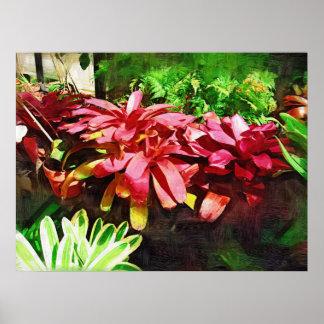 tropical bromeliad, fairchild tropical garden, mia poster