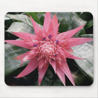 Tropical Bromeliad Flower Mouse Pad
