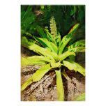 Tropical Bromeliad - walk in the garden Poster