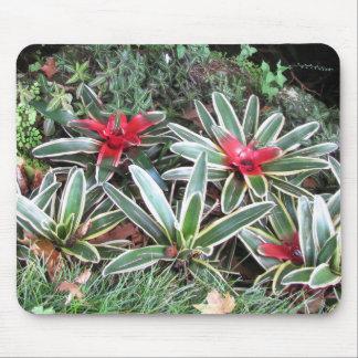 Tropical bromeliads mouse pad