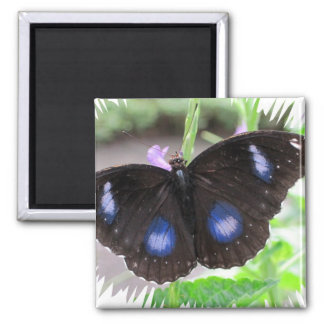 Tropical Butterfly 2 Inch Square Magnet