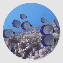 Tropical Butterfly Fish Classic Round Sticker