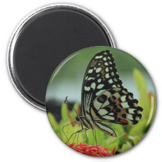 Tropical Butterfly Magnet