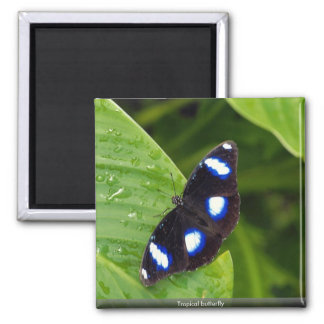 Tropical butterfly fridge magnets