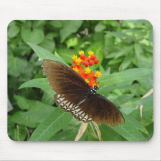 tropical butterfly mouse pad