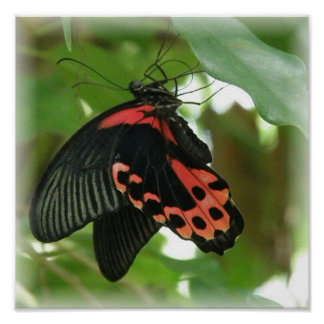 Tropical Butterfly Poster Print