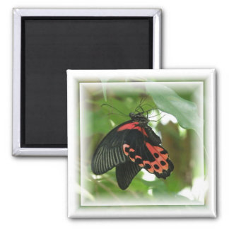 Tropical Butterfly Square Magnet Fridge Magnet