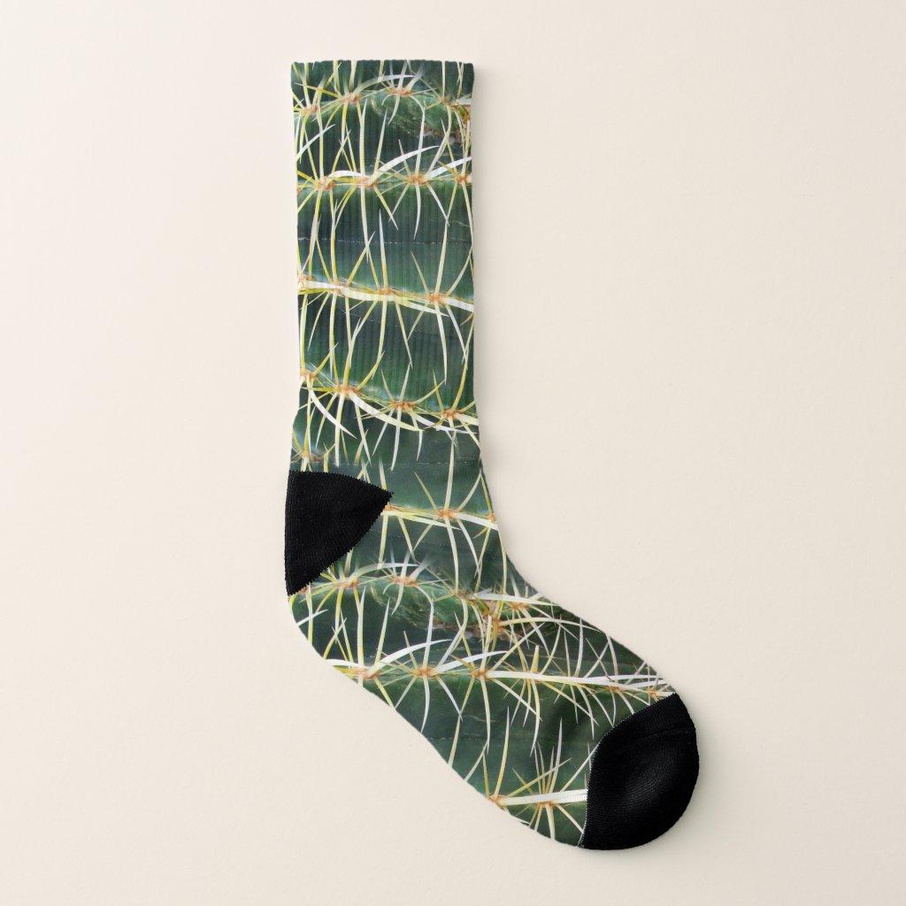 Tropical Cactus Photo