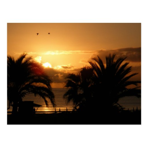 Tropical Canary islands sunrise RIU Postcard