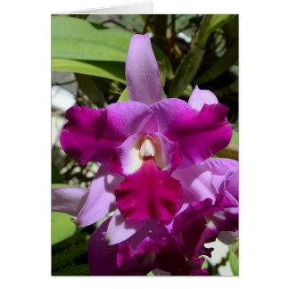 Tropical Cattleya Orchid Flower Card
