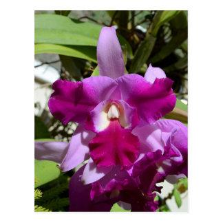 Tropical Cattleya Orchid Flower Postcard