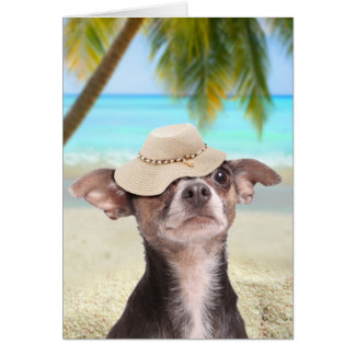 Tropical chihuahua on vacation card