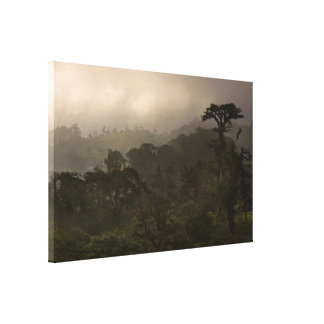 Tropical Cloud Forest at Sunset Gallery Wrapped Canvas