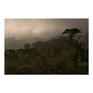 Tropical Cloud Forest at Sunset Print