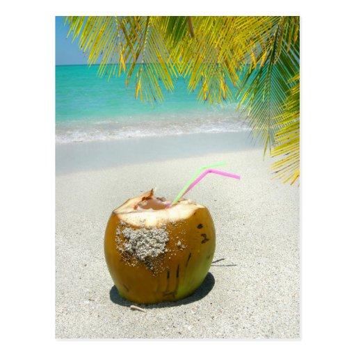 Tropical coconut on a beach in the Caribbean Post Card