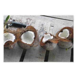 Tropical Coconuts, Bocas del Toro, Panama [Photo]