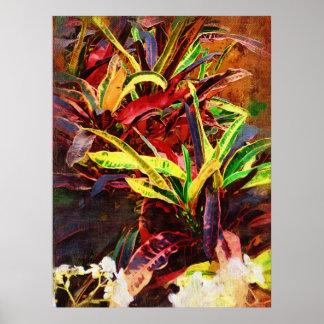 Tropical codiaeum - Croton Poster