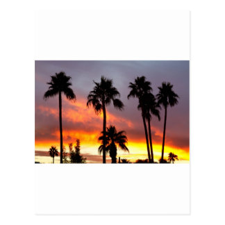 Tropical Colorful Storm Postcard