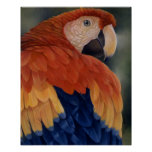 """Tropical Cool"" - Macaw Print"