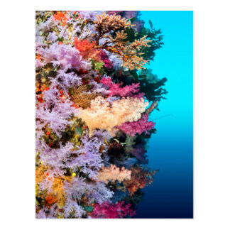 Tropical coral reef postcard