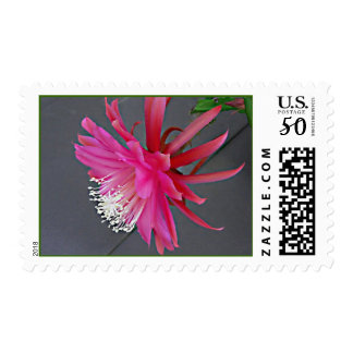Tropical Epiphyllum on Stamp