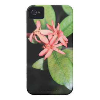 Tropical Exotic Coral Flower, Kew iPhone 4 Case