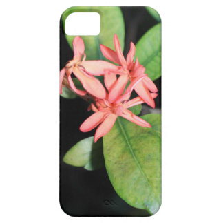 Tropical Exotic Coral Flower, Kew iPhone case