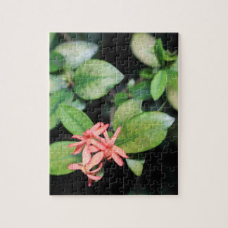 Tropical Exotic Coral Flower, Kew Jigsaw Puzzle
