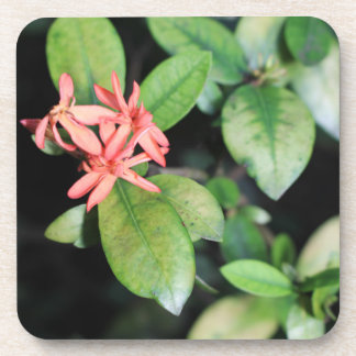 Tropical Exotic Coral Flower, Kew Plastic Coasters