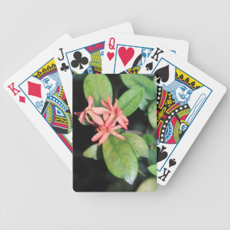 Tropical Exotic Coral Flower, Kew Playing Cards