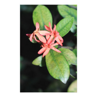 Tropical Exotic Coral Flower, Kew Stationery