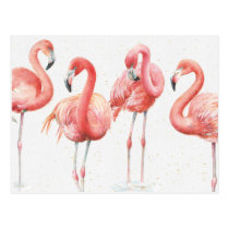 Tropical   Family of Flamingos Postcard