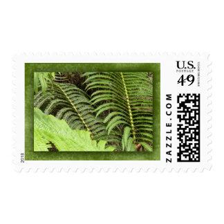 Tropical ferns stamp