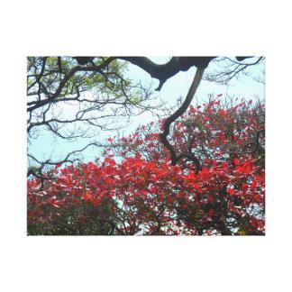 Tropical Fig Tree Canvas Print