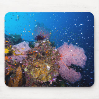 Tropical Fish and Coral Fans Mousepad