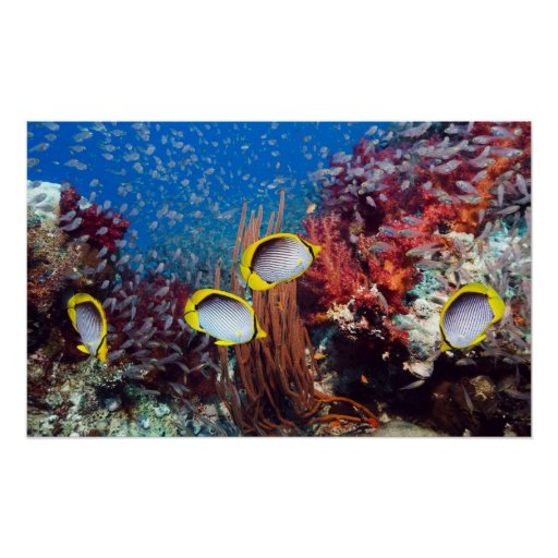 Tropical Fish and Coral Print
