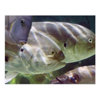 Tropical Fish Art Postcard