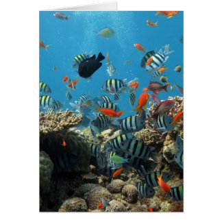 Tropical Fish Chaos Card
