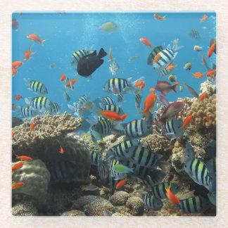 Tropical Fish Chaos Glass Coaster