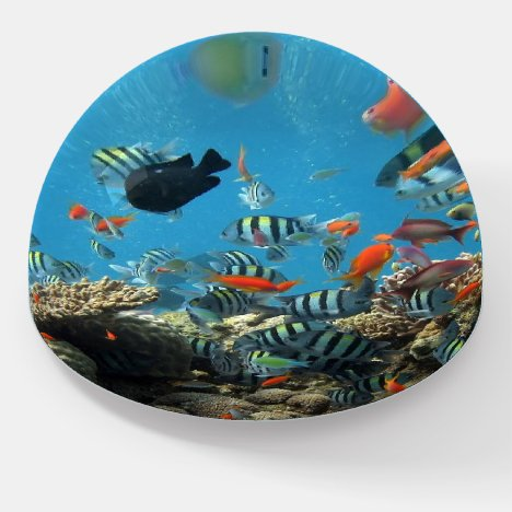 Tropical Fish Chaos Paperweight